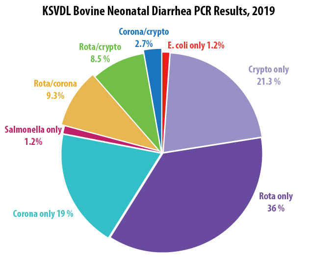 bovine neonatal diarrhea PCR results
